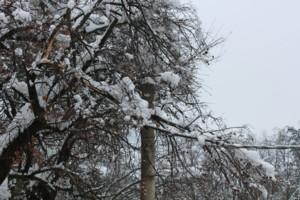 Danni Big Snow