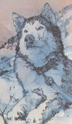 Cuore di lupo di Ron D. Lawrence