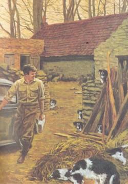Beato tra le bestie, l'autobiografia del veterinario di campagna  James Herriot
