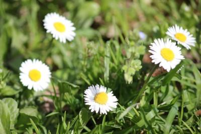 Fiori di primavera 3