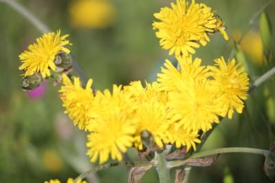 Fiori di primavera 4