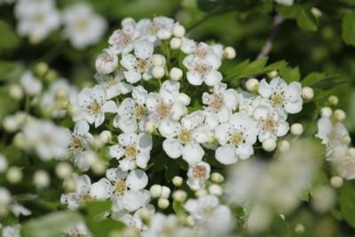 Fiori di primavera 5