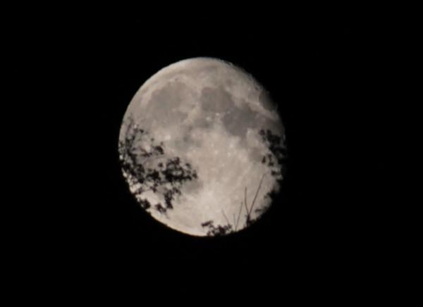 La luna tra gli alberi