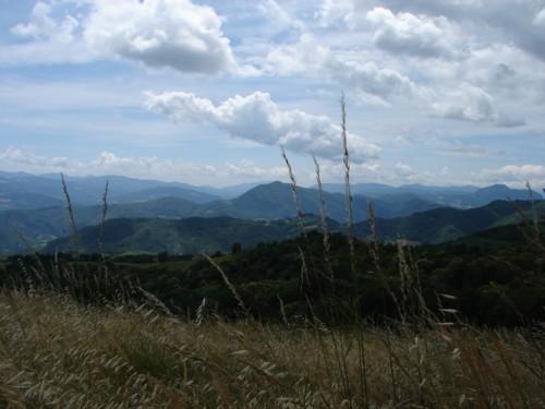 Colline boscose